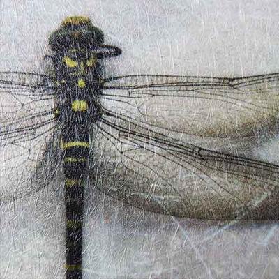 Picture of Papergraphics Digimura-1.1